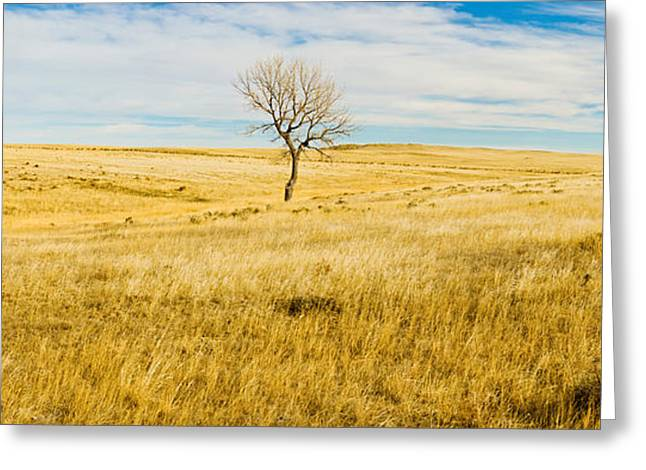 Botany Greeting Cards - Lone Hackberry Tree In Autumn Plains Greeting Card by Panoramic Images