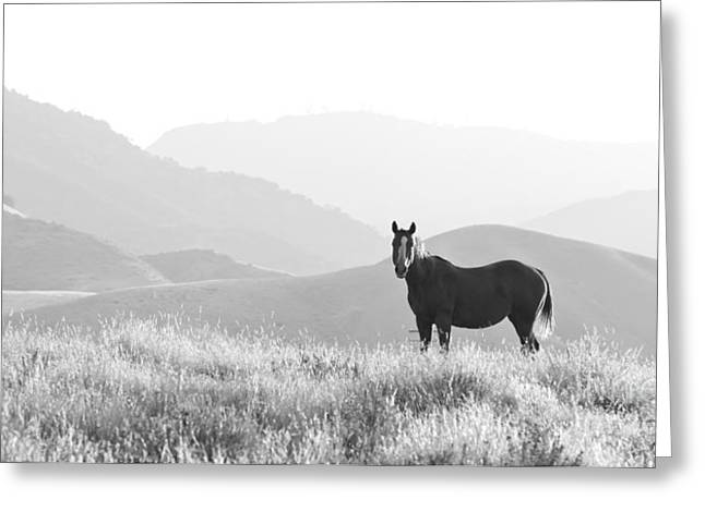 Lone Horse Greeting Cards - Lone horse Greeting Card by B Christopher