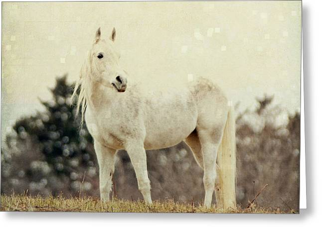 Lone Horse Greeting Cards - Lone Horse Greeting Card by Diane Miller