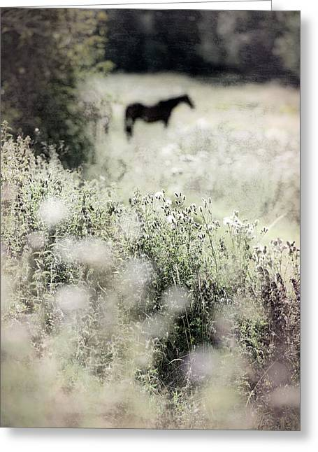 Lone Horse Greeting Cards - Lone Horse In A Summer Meadow Greeting Card by Paul Bucknall