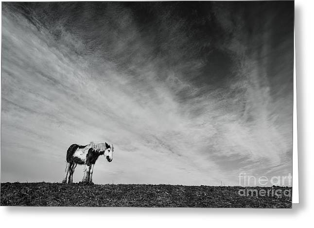 Lone Horse Greeting Cards - Lone Horse Greeting Card by Julian Eales