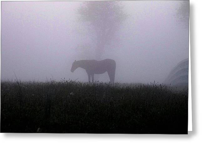 Lone Horse Greeting Cards - Lone Horse Greeting Card by Mike Quinn