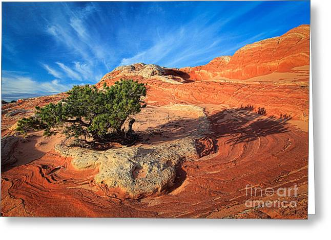 Colorful Cloud Formations Greeting Cards - Lone Juniper Greeting Card by Inge Johnsson