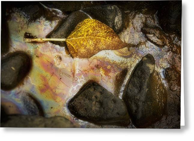 Abstract Water And Fall Leaves Greeting Cards - Lone Leaf Greeting Card by Fred Hunt