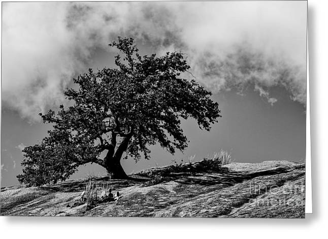 Turkey Buzzard Greeting Cards - Lone Oak Atop Little Rock - Enchanted Rock State Natural Area Texas Hill Country Greeting Card by Silvio Ligutti