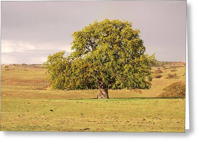 California Art Greeting Cards - Lone Oak Tree Greeting Card by Art Block Collections