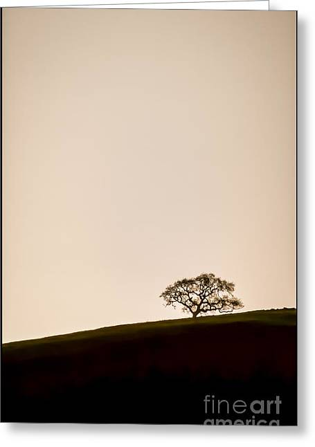 Canvas Floral Greeting Cards - Lone Oak Tree Greeting Card by Holly Martin