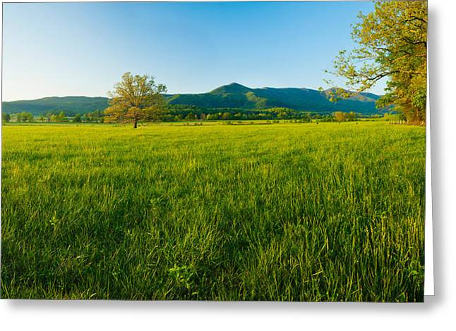 Smoky Greeting Cards - Lone Oak Tree In A Field, Cades Cove Greeting Card by Panoramic Images