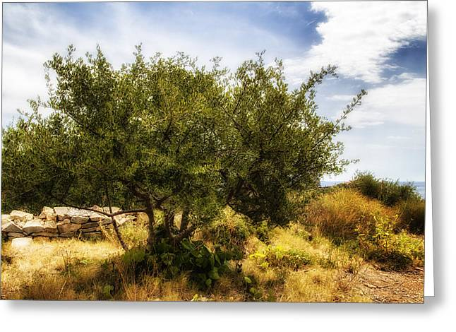 South Of France Greeting Cards - Lone Olive Tree Greeting Card by Nomad Art And  Design
