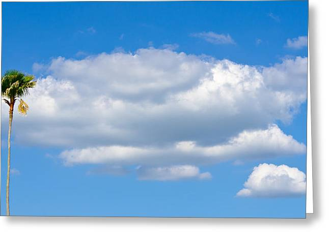 St Petersburg Florida Greeting Cards - Lone Palm Tree Against the Cloud and Blue Sky Greeting Card by Robert Neff