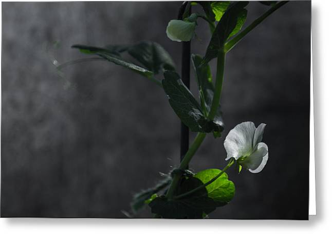 Canon 6d Greeting Cards - Lone petal wall art Greeting Card by Chris Fletcher