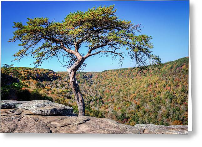 Lone Pine Greeting Cards - Lone Pine against Fall Colors Greeting Card by Douglas Barnett