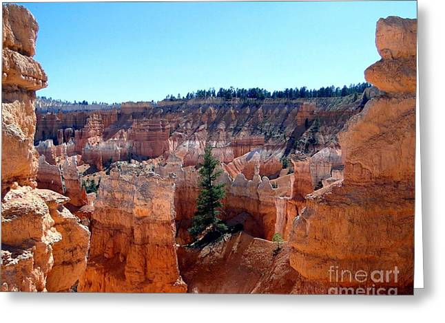 Tree Roots Greeting Cards - Lone Pine Amidst Bryce Canyon Hoodoos Greeting Card by Barbie Corbett-Newmin