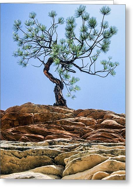 Lone Pine Greeting Cards - Lone Pine Greeting Card by Kelley King