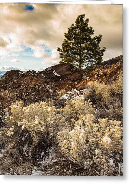 Siskiyou County Greeting Cards - Lone Pine Greeting Card by Randy Wood