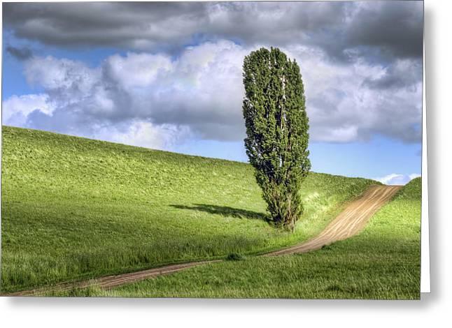 Minimalist Landscape Greeting Cards - Lone Poplar and Road Greeting Card by Nikolyn McDonald