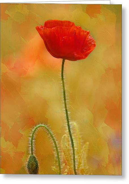 """flora Prints"" Greeting Cards - Lone Poppy Greeting Card by Carolyn Dalessandro"