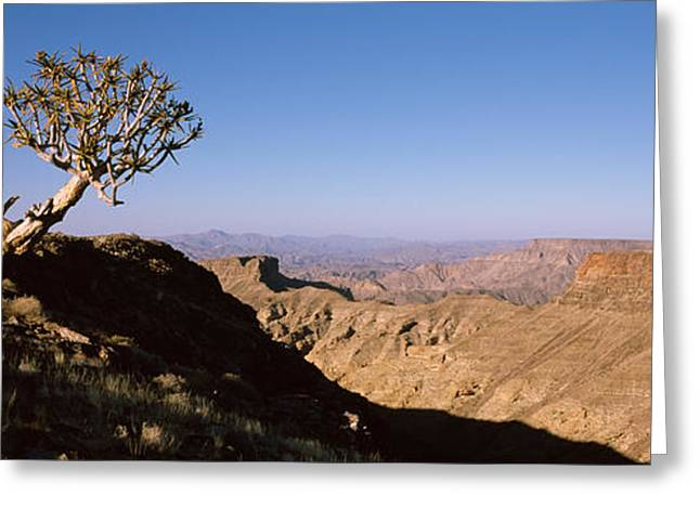 Ai Greeting Cards - Lone Quiver Tree Aloe Dichotoma Greeting Card by Panoramic Images