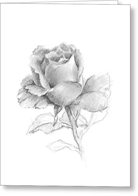 Interior Still Life Drawings Greeting Cards - Lone Rose Greeting Card by Sarah Parks