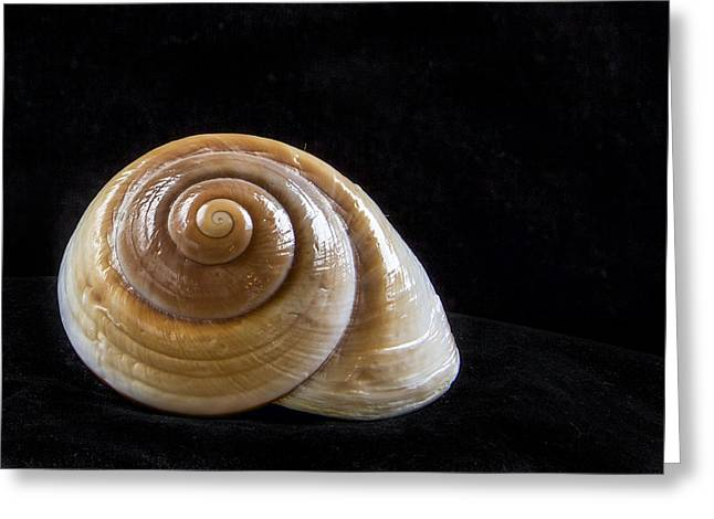 Shell Collecting Greeting Cards - Lone Shell Greeting Card by Jean Noren