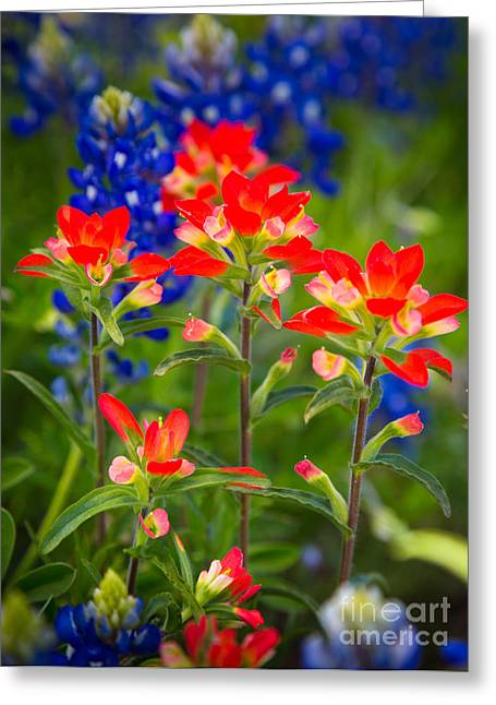 Bluebonnet Landscape Greeting Cards - Lone Star Blooms Greeting Card by Inge Johnsson
