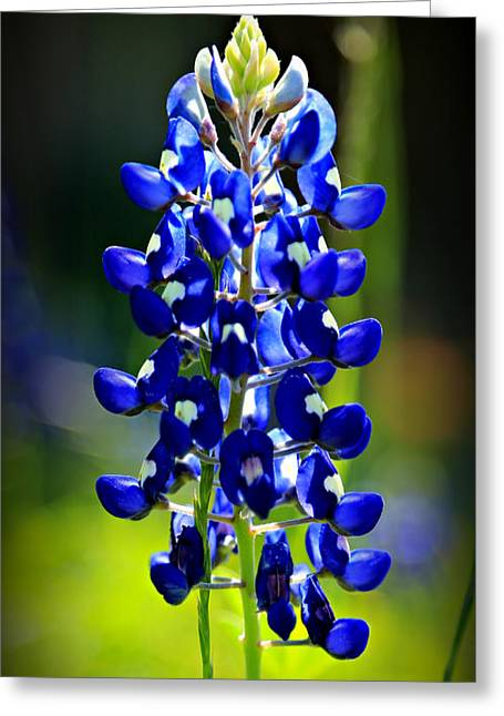 Lone Star Bluebonnet Greeting Card by Stephen Stookey