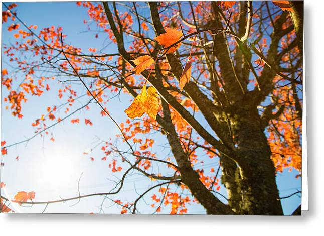 Colors Of Autumn Greeting Cards - Lone traveler Greeting Card by Kunal Mehra