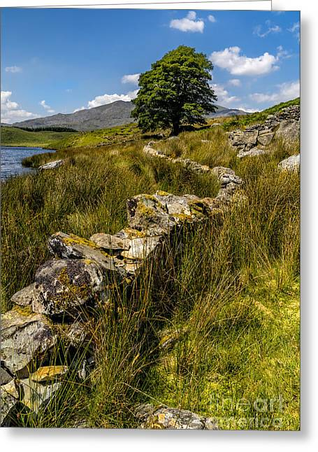 Hiking Greeting Cards - Lone Tree Greeting Card by Adrian Evans