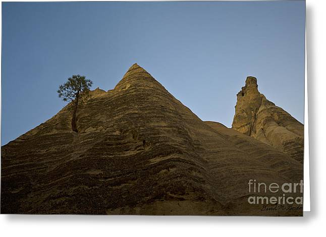 Elevation Digital Art Greeting Cards - Lone Tree and Sandstone Peaks Greeting Card by David Gordon