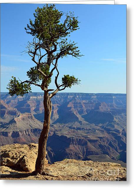 Beauty In Nature Greeting Cards - Lone Tree at the Edge of the Grand Canyon Vertical Greeting Card by Shawn O