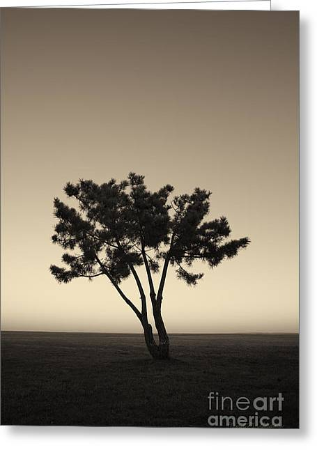 Warm Tones Greeting Cards - Lone Tree at Twilight Toned Greeting Card by David Gordon