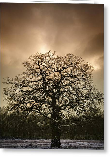 Snowy Tree Greeting Cards - Lone Tree Greeting Card by Amanda And Christopher Elwell