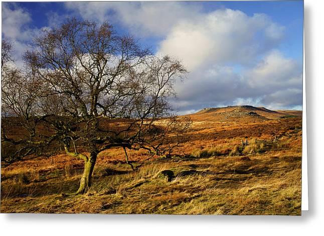 Lone Tree  Greeting Card by Darren Galpin