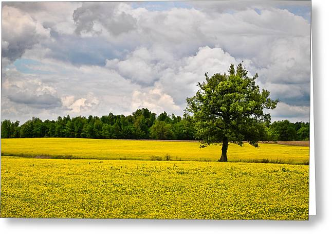 Overcast Day Digital Art Greeting Cards - Lone Tree in Field of Wildflowers Greeting Card by Greg Jackson