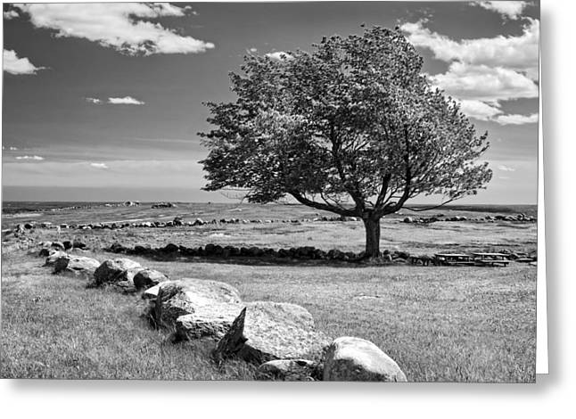 Maine Farms Digital Greeting Cards - Lone Tree In Maine Blueberry Field Greeting Card by Keith Webber Jr