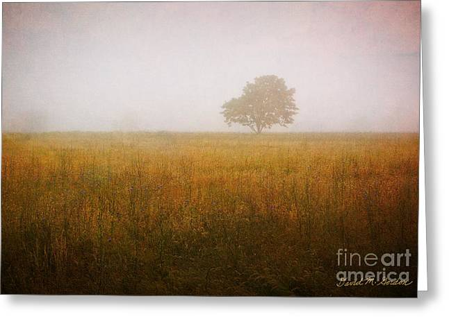 Singular Greeting Cards - Lone Tree In Meadow No. 2 Greeting Card by David Gordon