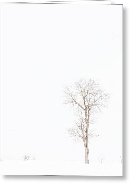 Snowstorm Digital Art Greeting Cards - Lone Tree In Snowstorm Greeting Card by Randy Steele