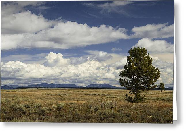 Western Photographs Greeting Cards - Lone Tree in the Grand Teton National Park Greeting Card by Randall Nyhof