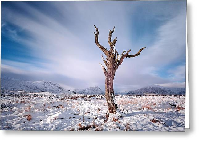 Lone Tree In The Snow Greeting Card by Grant Glendinning
