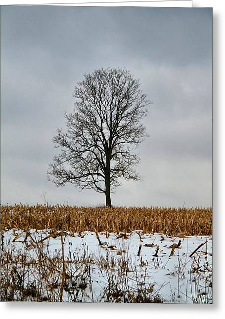 The Cornfield Greeting Cards - Lone Tree In Winter Greeting Card by Dan Sproul