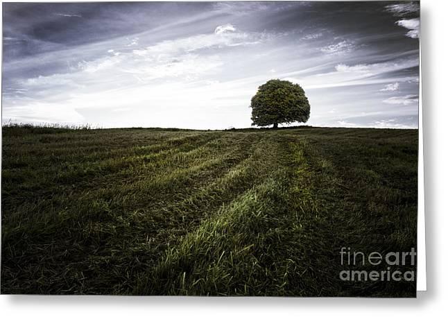 Lone Tree  Greeting Card by John Farnan