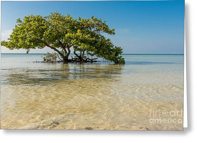 Ocean Photography Greeting Cards - Lone Tree on Annes Beach Greeting Card by Nicholas  Pappagallo Jr
