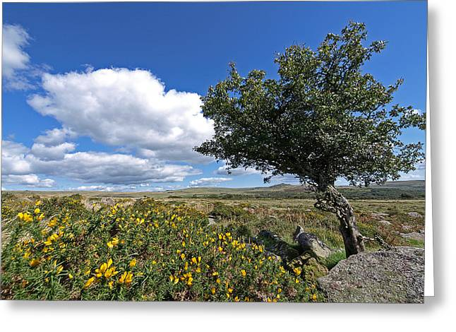 Green And Yellow Greeting Cards - Lone Tree on Dartmoor Greeting Card by Gill Billington