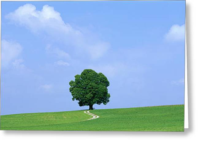 Individualism Greeting Cards - Lone Tree On Hilltop Salzkammergut Greeting Card by Panoramic Images
