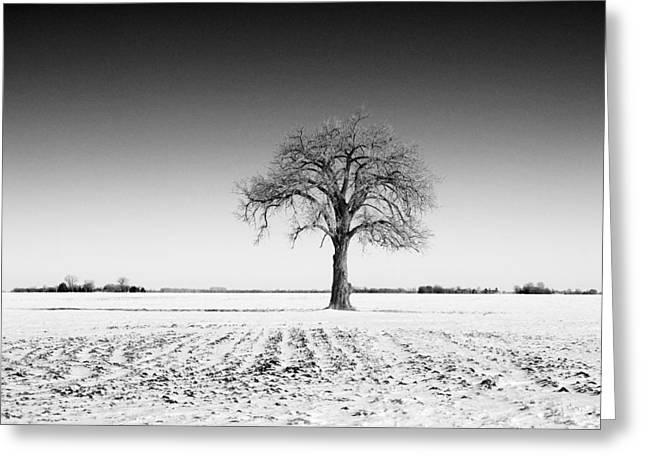 Mid West Landscape Art Greeting Cards - Lone Tree on Snowy Field Greeting Card by Donald  Erickson