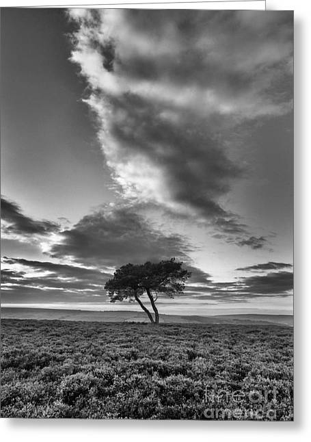 The North Greeting Cards - Lone Tree on Wheeldale Moor Greeting Card by John Potter