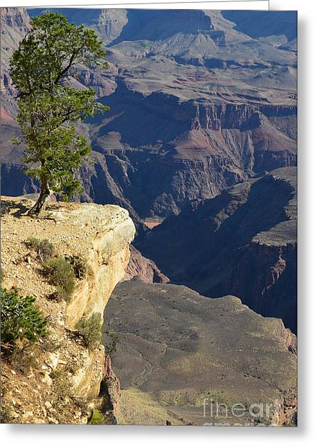 Grand Canyon Photographs Greeting Cards - Lone Tree Overlooking Grand Canyon National Park Vertical Greeting Card by Shawn O