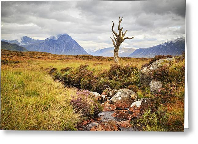 Rannoch Moor Greeting Cards - Lone Tree Rannoch Moor Scotland Greeting Card by Colin and Linda McKie