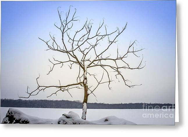 Freeze Pyrography Greeting Cards - Lone tree Greeting Card by Rebecca Brooks