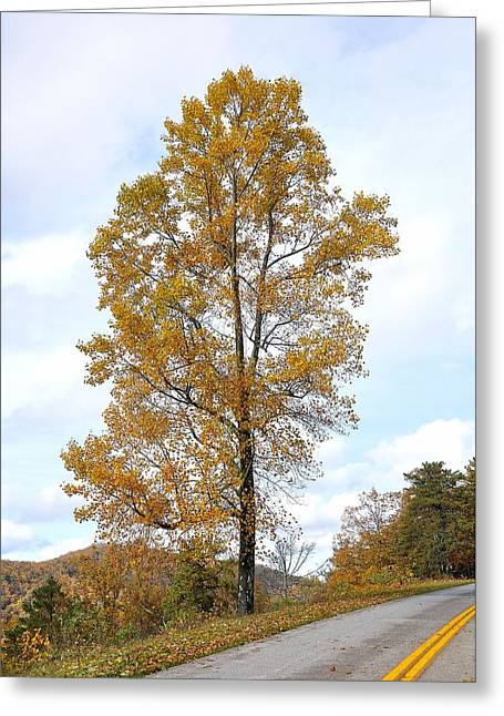 Yellow Line Greeting Cards - Lone Tree Greeting Card by Todd Hostetter